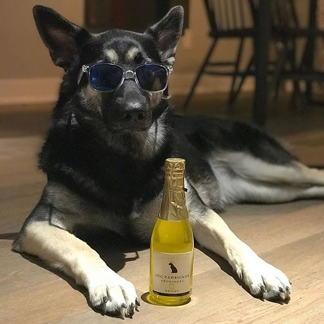 Cat Wine and Dog Wine non-alcoholic beverages that your pets can enjoy! Distributor of PetBeverages! Cheers to the Felines and Canines in your life
