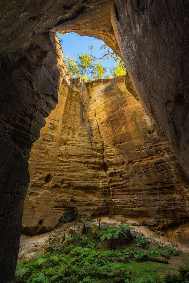 The Amphitheatre at Carnarvon Gorge in Queensland is a massive shaft that leads down from the top of the gorge. This unusual formation is caused by the crossing of two fault lines and wind/water erosion. This amazing natural wonder is located approximately 4km from the park headquarters and is definitely worth the walk! #thisisqueensland #qldparks #nationalpark Discovered by Nathan White Images at Carnarvon National Park, Carnarvon Park, Australia