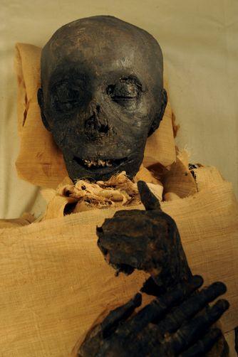 The mummy of Thutmosis III.