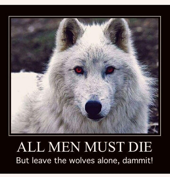 Game of thrones - yup, kill all the humans you want Martin....just leave the Direwolves ALIVE....