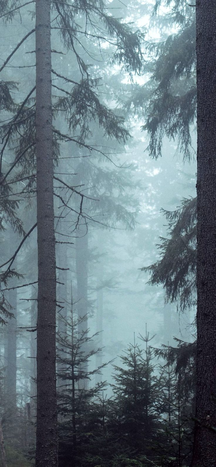 forest woods misty forest trees wallpaper Iphone X
