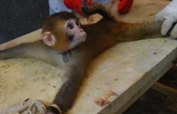 stop animal cruelty in science experiments essay Animal research plays an integral role in  and why we need psychologists to speak out  of other topics depend on a science that includes animal.