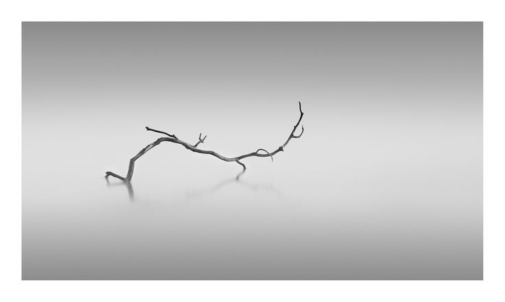 Branch | by Neil Burnell