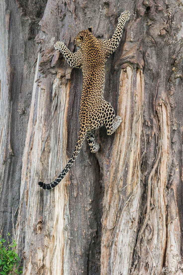 """Get me a ladder!!"" by Marc MOL on 500px."