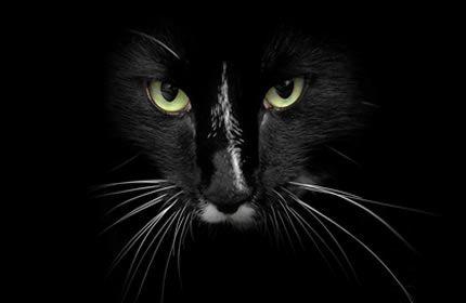 svart katt, ansikt, grønne øyne, kinnskjegg, kjæledyr, dyr, mørk, svart