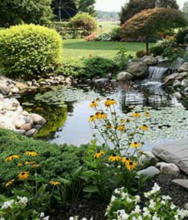 17 best images about garden ponds on pinterest gardens ForGarden Pond 101