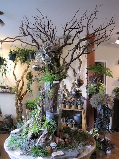 Tillandsia table