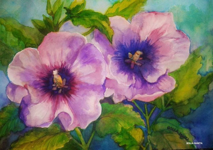 Rose of Sharon - Mályvarózsa Aquarelle - 21 x 30 cm - by Márta Bolla - Hungary