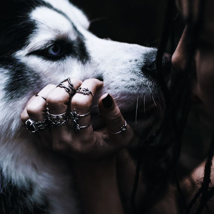 ✧♆✧ Running With The Wolves New In Store NOW! ✧♆✧ shopdixi.com ✧♆✧ dixi // jewellery // jewelry // boho // bohemian // grunge // goth // dark // mystic // magic // witchy // sterling silver // rings // thorn // wild // wolves