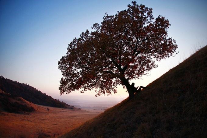 A tree apart