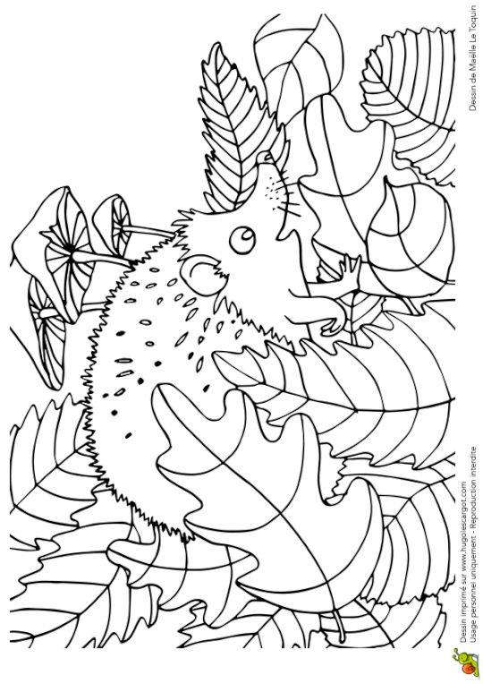 Coloriage cache cache feuilles herisson