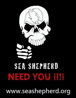 Fabuleux 19 best Sailors for Sea Shepherd images on Pinterest | Sea  FH47