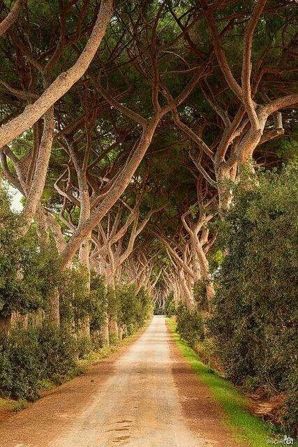 Livorno, Tuscany, Italy – Beautiful path through the trees