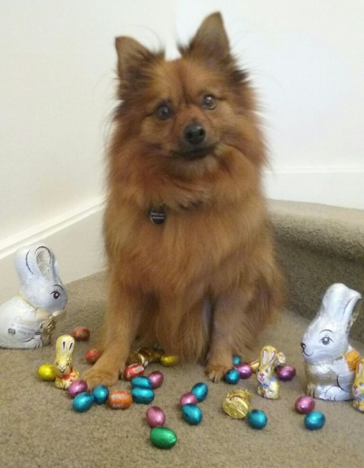 Trying to do an Easter photo shoot with Ariel