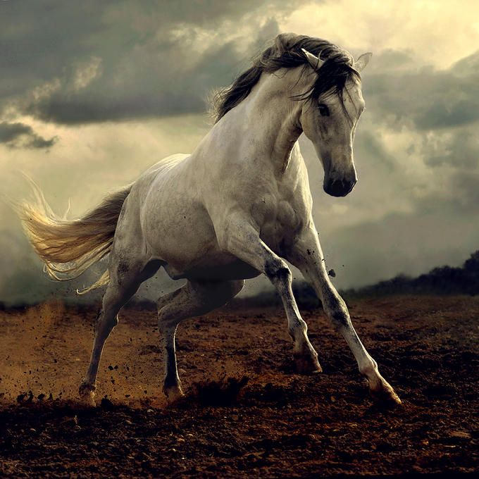 Stunning Horse Photography by Wojtek Kwiatkowski