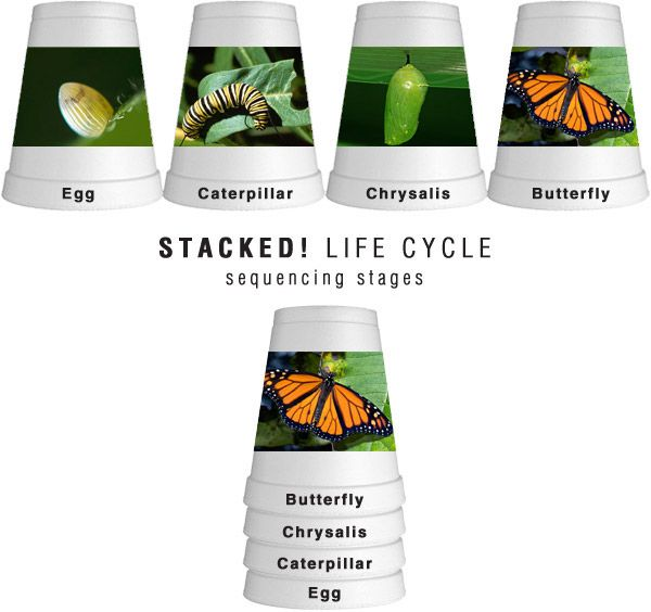 Stacked Life Cycle!