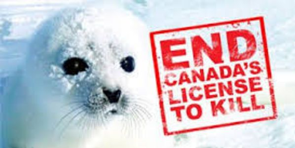 Stop the Canadian seal hunt. http://www.thepetitionsite.com/317/970/124/stop-the-canadian-seal-hunt/?cid=FB_TAF #SeaShepherd #defendconserveprotect