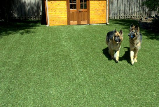 how to keep my dog in my yard