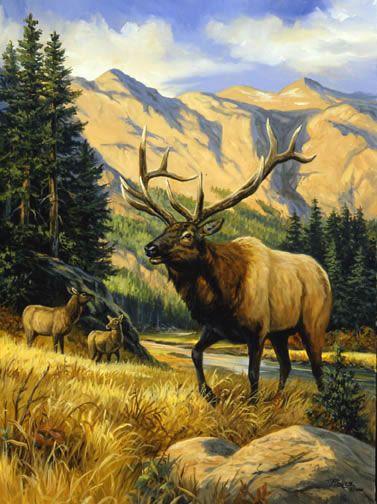Linda Picken Art Studio / Elk Mountain.jpg