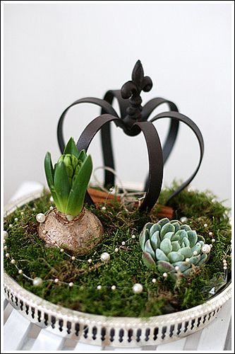 Crown with succulent plants