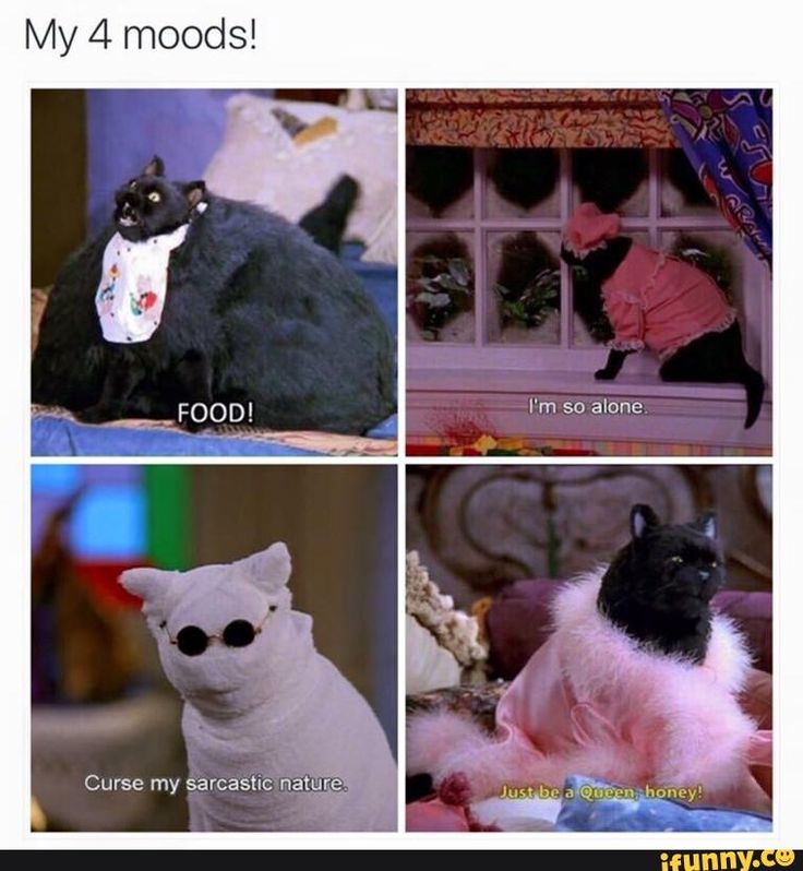 My 4 moods, told by Salem the cat from Sabrina the Teenage Witch