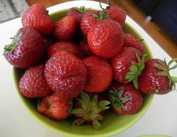 jahody,erdbere