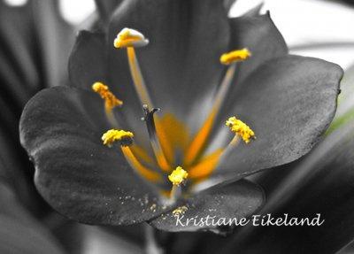 Sort blomst A4