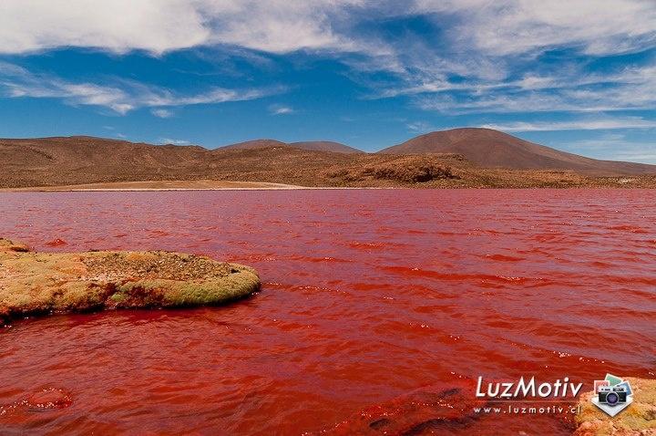 Laguna  Roja a 3700 m de altura sobre el nivel del mar  en medio del Desierto de Atacama