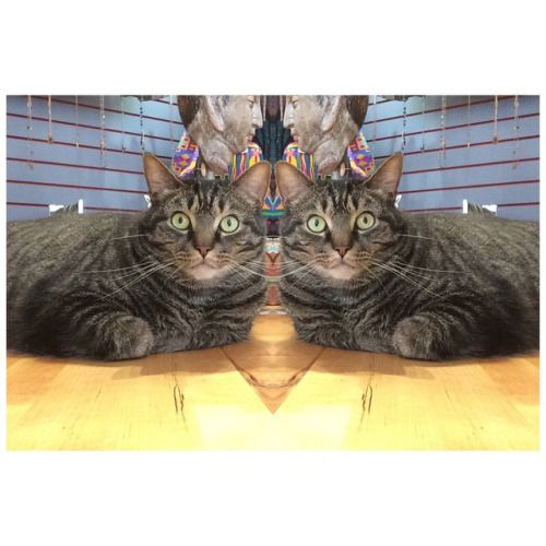I helped Monty take this selfie style so he could watch the mirror effect. His expression says it all.    #firefinch #nashville #catlife #catsofinstagram #catstuff #nashvillepaw @nashvillepaw #trippy #mirror (at Fire Finch)