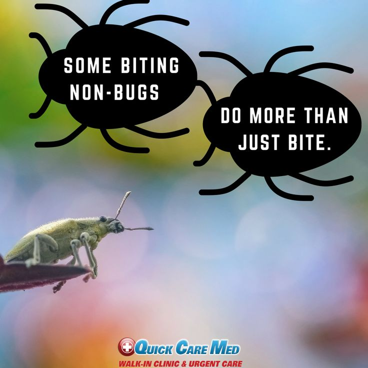 Female botflies, for example, attach their eggs to the underside of mosquitoes. When the mosquito lands on its victim, the eggs hatch and larvae burrow into the victim's skin, causing painful bumps that can lead to sepsis if untreated. #bugs #bites #skin #botflies #eggs #mosquitoes #painful #bumps