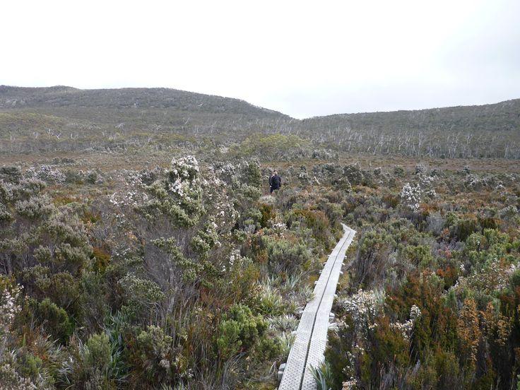 Duck Boards behind Mount Wellington