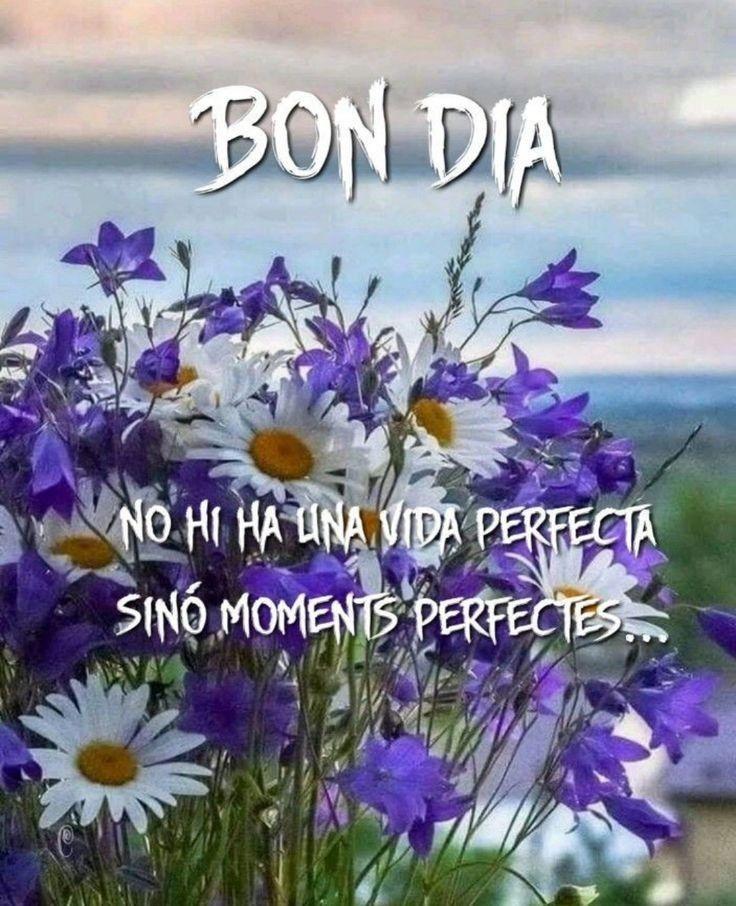 Bon Dia Vida Daily Spanish 2020 To 2021