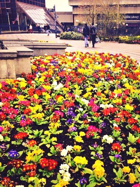 Birmingham in Bloom