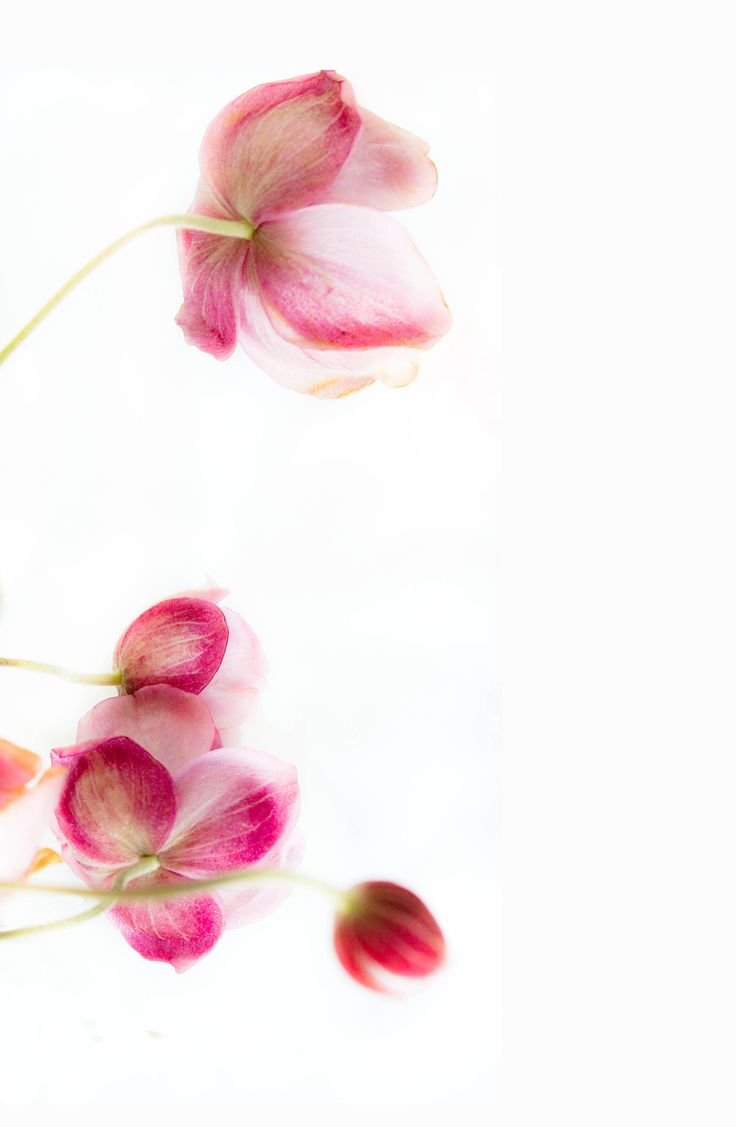 best 25 pink flower wallpaper ideas on pinterest pink flowers
