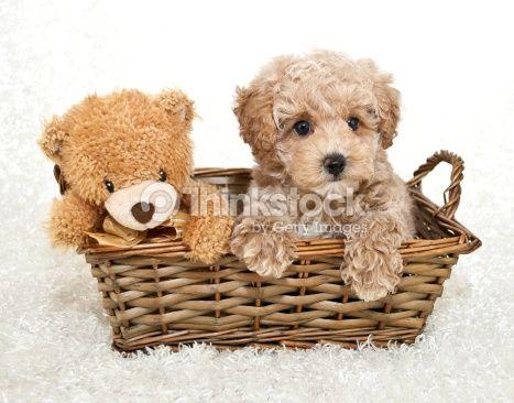 Friends Stock Photo 481889793