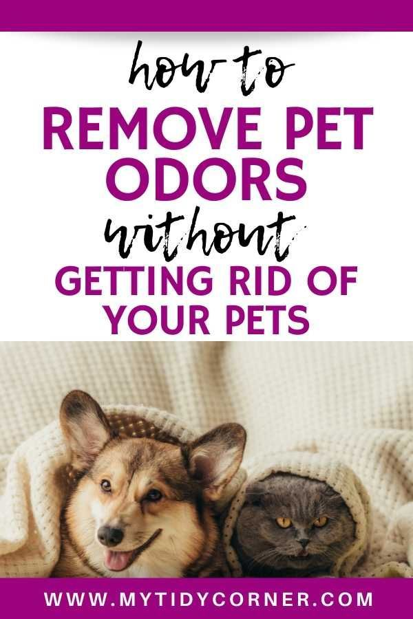 Learn How To Get Rid Of Pet Odors Out Of Your House Without