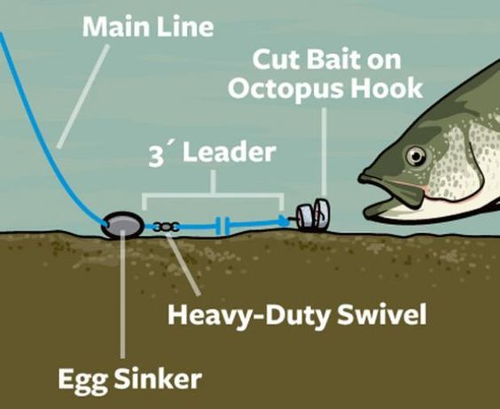 160 best images about rigs on pinterest hooks catfish for Best fishing line for walleye