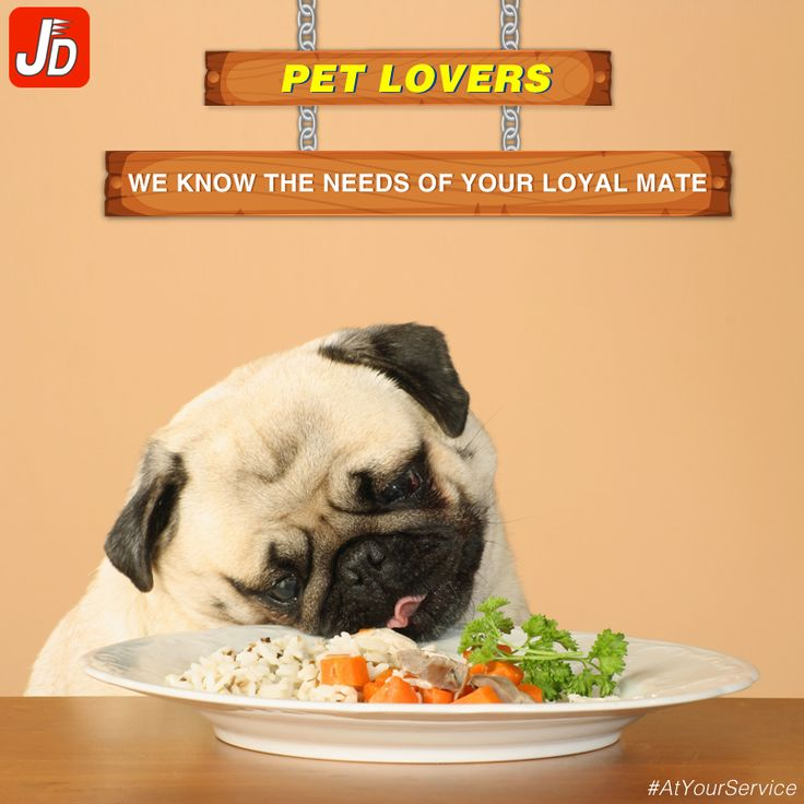 Buy pet food, products & accessories from justdelivr at best price. Download our app now