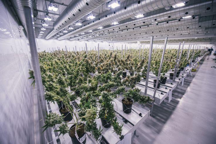 Inside the $1 billion marijuana 'unicorn' that operates out of an abandoned Hershey's factory