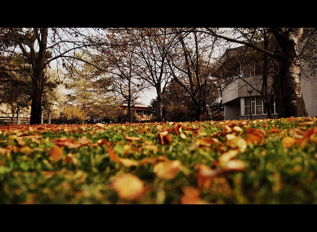 i love you autumn by sena yzb, via Flickr