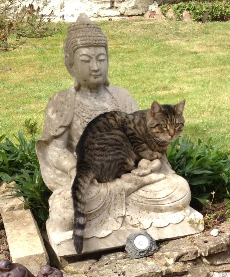 """The great Zen master of the 13th century, Dogen Zenji, taught that the goal of Zen practice is to realize our Buddha Nature. But then he pointed out that """"mountains, rivers and the grasses"""" were themselves the Buddha Nature.❤️☀️"""