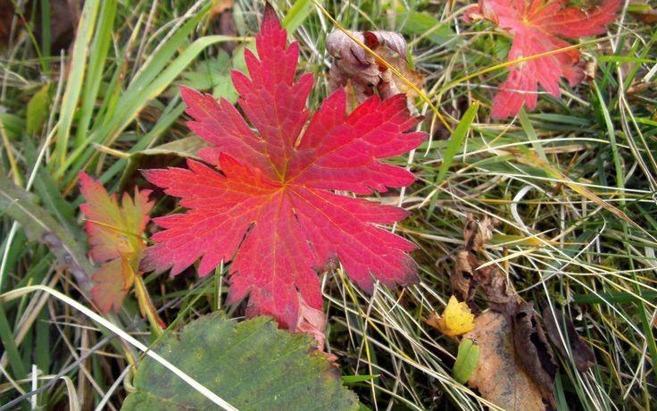 Have a Wonderful Equinox (plus Autumn Photos)