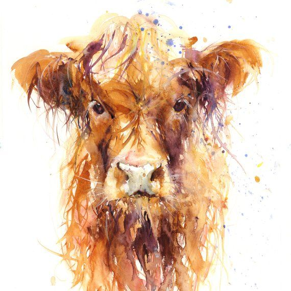 Cow art, LIMITED edition print, HIGHLAND COW watercolor painting Scottish wall decor signed, illustration, animal art, home decor
