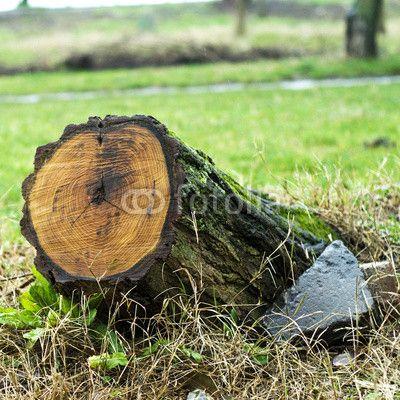 Tree stump © morgan capasso