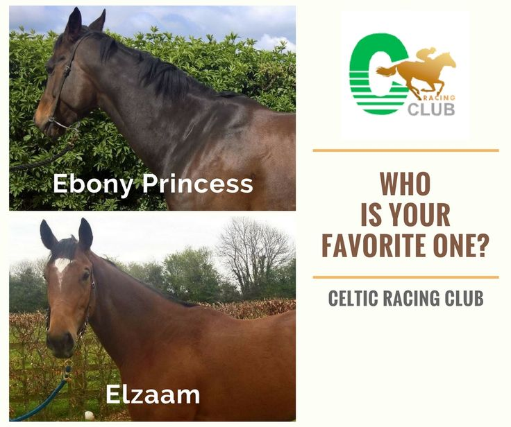 Tell us... which one your favourite one is?  Here is the list of Celtic Racing Club horses: www.celticracingclub.com/club-horses/   #CelticRacingClub #RacingHorses
