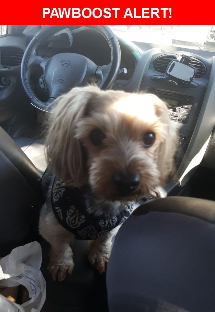 Please spread the word! Happy was last seen in Granada Hills, CA 91344.    Nearest Address: Near Woodley Ave, CA, United States