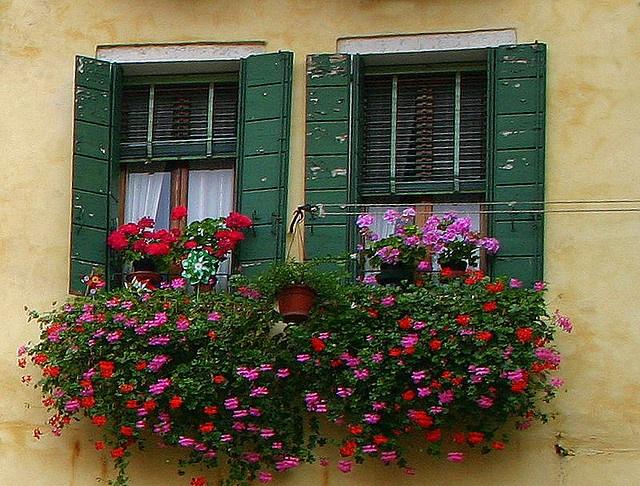 Beautiful window boxes