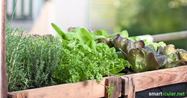 Obst und Gemüse vom Balkon - mit diesen Tipps kannst du auch einen kleinen Balkon in ein Selbstversorger-Paradies verwandeln.
