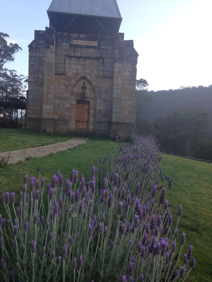 Lavender at St Joseph's Guesthouse  http://www.stjosephsguesthouse.com.au/