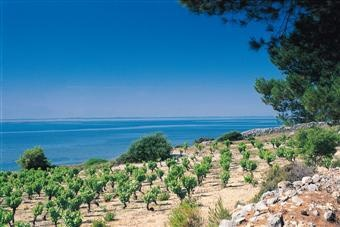 Banyuls sur Mer - Roussillon France